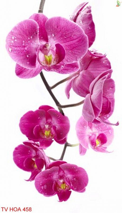 Tranh về hoa 458