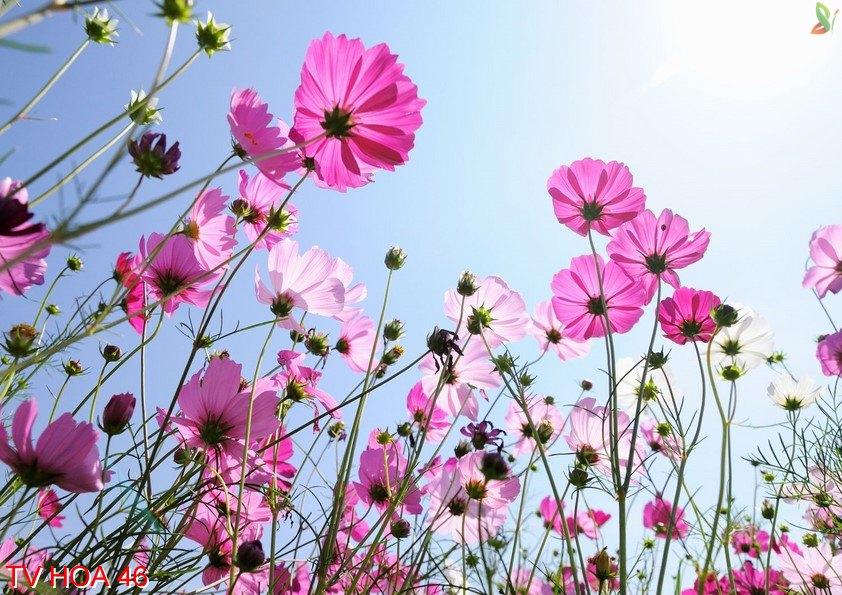 Tranh về hoa 46