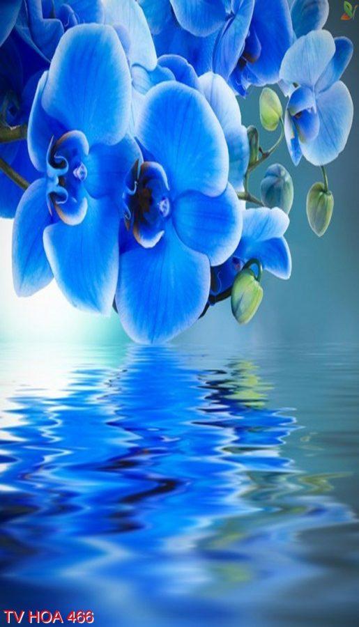 Tranh về hoa 466