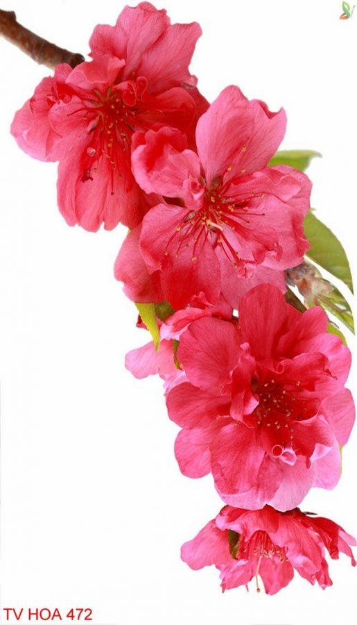 Tranh về hoa 472