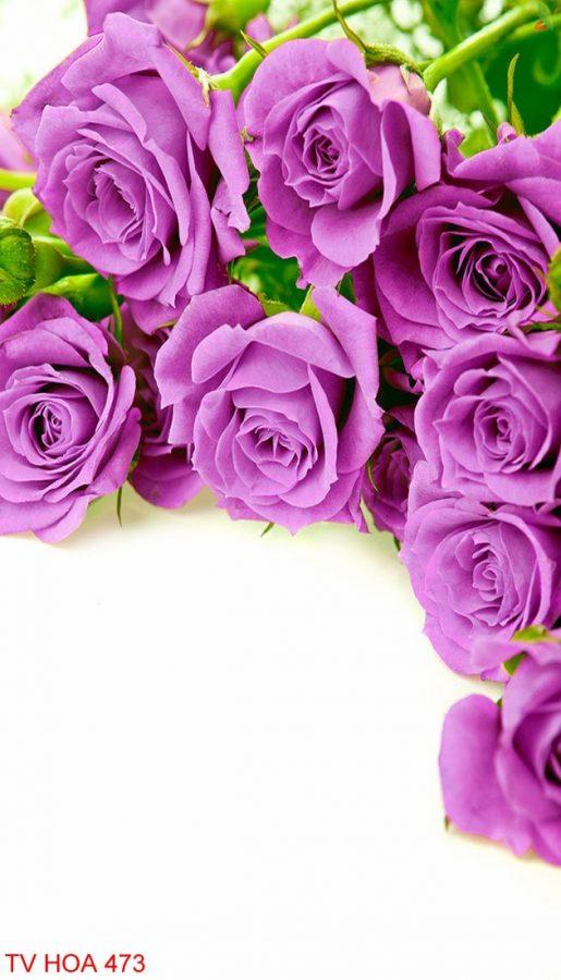 Tranh về hoa 473