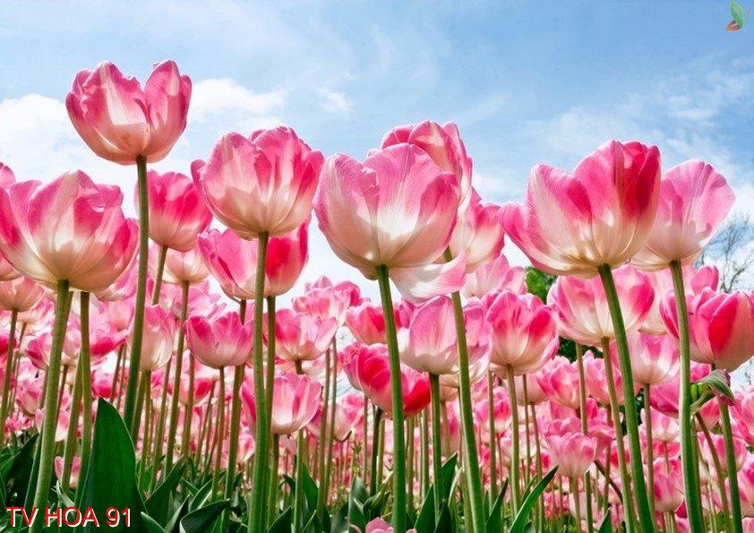 Tranh về hoa 91