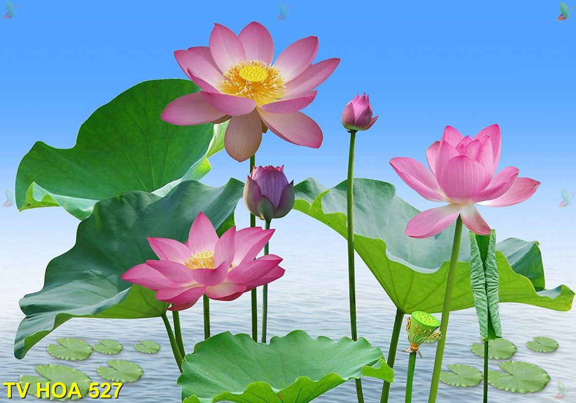 Tranh về hoa TV Hoa 527